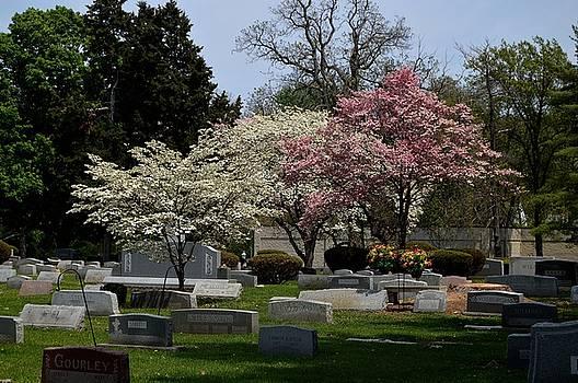 Spring at Oak Ridge by Sue Houston