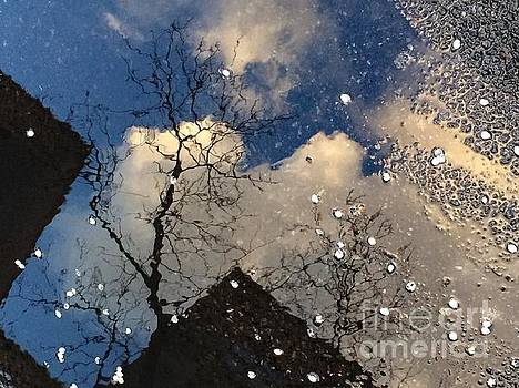 Spring Awakenings - World in a Puddle by Miriam Danar