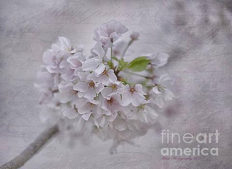 Spring Bloom by Linda Blair