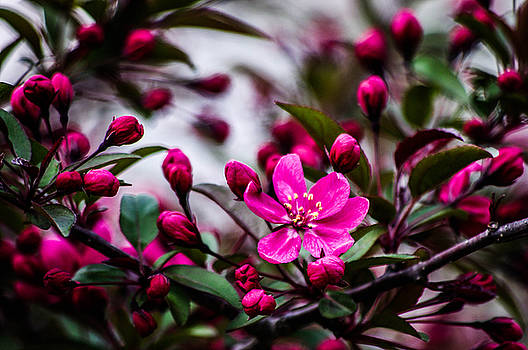 Spring blooming by Gerald Kloss