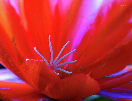 Xueling Zou - Spring Blossom 8
