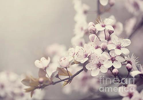 Spring Blossom by Jelena Jovanovic