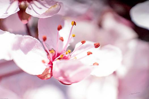 Mick Anderson - Spring Blossom