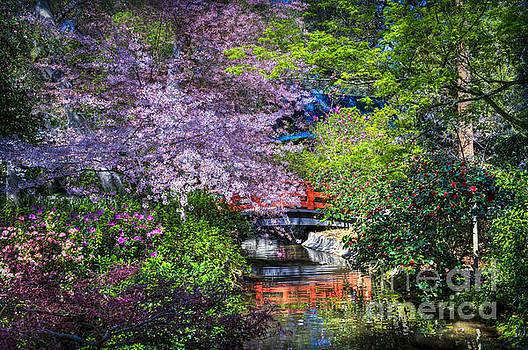 David Zanzinger - Spring Blossoms Reflections