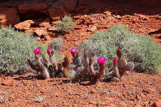 Spring Cactus by Sharon I Williams