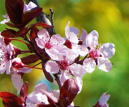 Spring Cheer by Vijay Sharon Govender