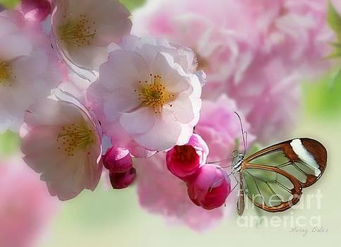 Spring Cherry Blossom by Morag Bates