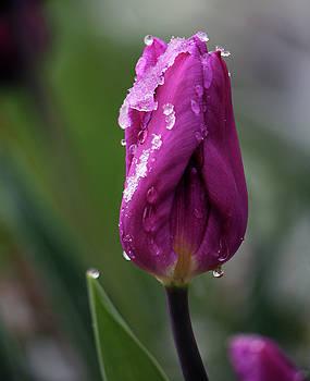 Spring coat by Silke Brubaker