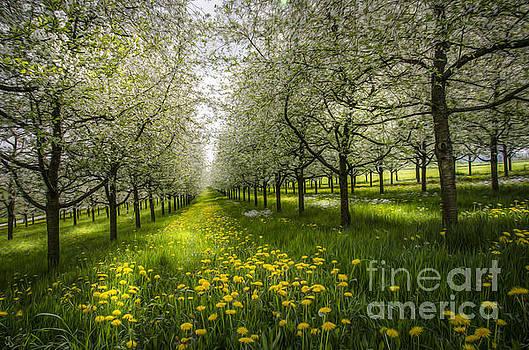 Spring Colors1 by Bruno Santoro