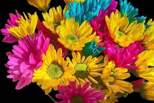 Cindy Boyd - Spring daisies 2