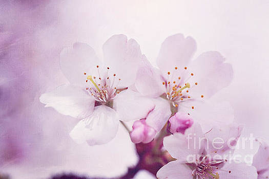 LHJB Photography - Spring Delight.....