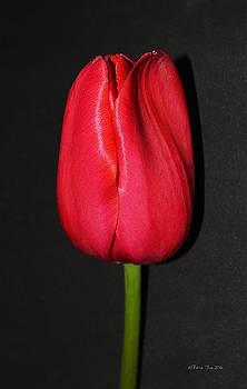 Spring Drop  by Felicia Tica