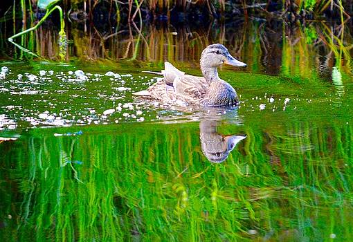 Spring Duck by Sheila Price