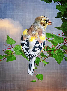 Spring Finch by Mary Timman