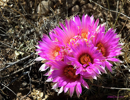 Spring Flower in Colorado by Jerry McElroy