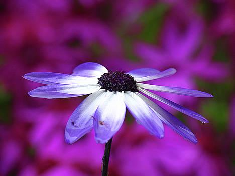 Juergen Roth - Spring Flower