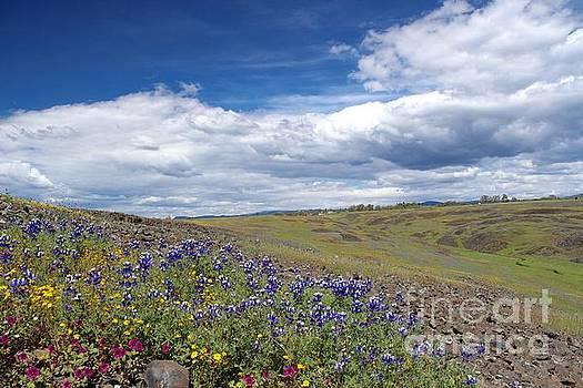 Spring flowers 2 by Irina Hays