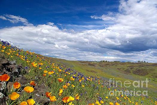 Spring flowers 3 by Irina Hays