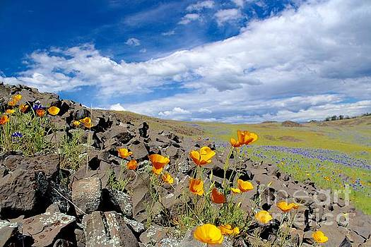 Spring Flowers by Irina Hays