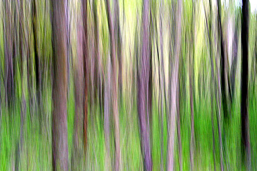 Spring Forest by Doug Hockman Photography