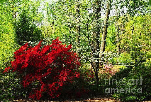 Spring Garden by Olivia Hardwicke