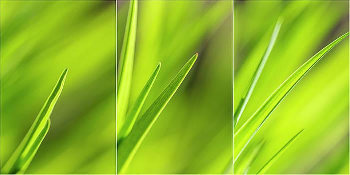 Spring Green by Veikko Suikkanen