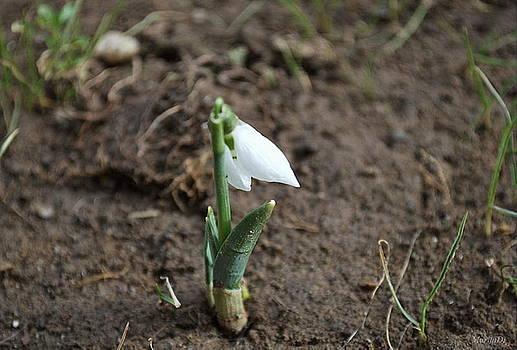 Spring has come into my garden by Marija Djedovic