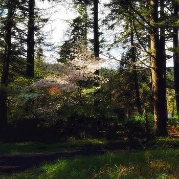 Spring Hymnal by Anna Bree