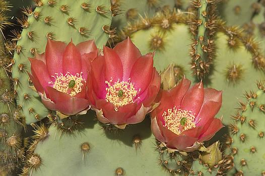 Sandra Bronstein - Spring in Arizona