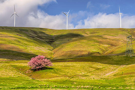 Spring in Columbia Hills by Dee Browning