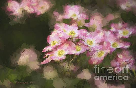 Spring in Pink by Linda Blair