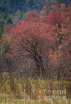 Spring in The Cove by Douglas Stucky