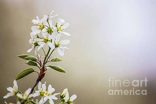 Spring Is Bursting Out All Over by Wayne Moran