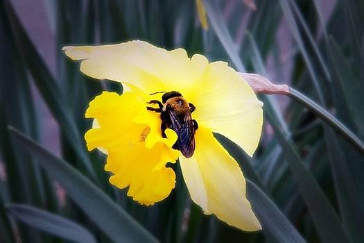 Spring is here by Troy  Skebo
