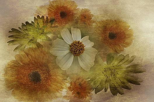 Spring by Judy Hall-Folde