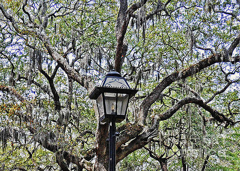 Spring Lantern 2 by Lydia Holly