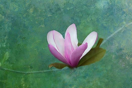 Kim Hojnacki - Spring Magnolia