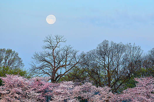 Spring Moon by Mitch Cat