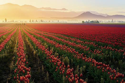 Spring Palette by Ryan Manuel