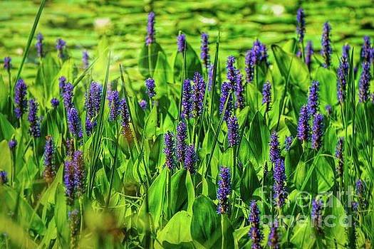Spring Purple Pond Flowers by Peggy Franz
