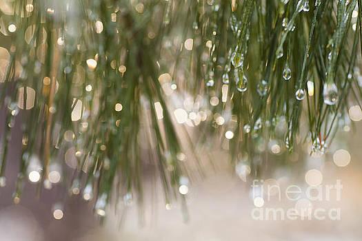 Spring Sparkle by Sue OConnor