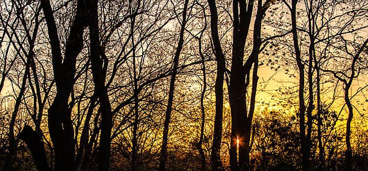 Spring Sunrise by Kathleen McGinley
