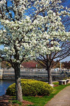 Karol  Livote - Spring Time In Westport