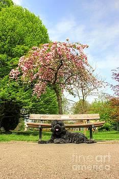 Spring Time Portrait by Vicki Spindler