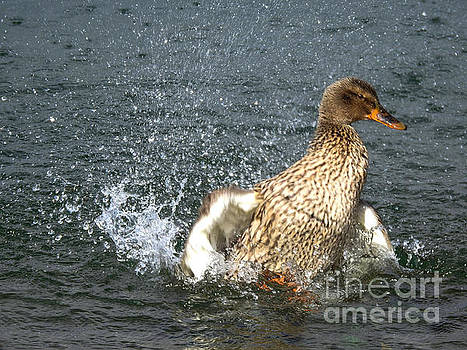 Spring Time With A Bath by Brenda Bostic