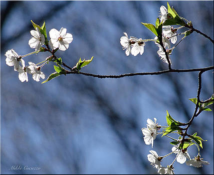 Spring tree blossoms by Mikki Cucuzzo