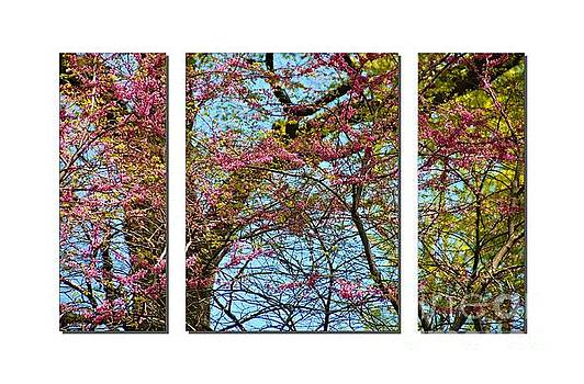Spring Trees  by Elaine Manley