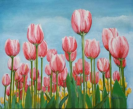 Spring Tulips  by Connie Rowsell