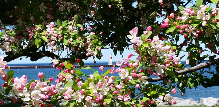 Spring View by Wendy Shoults