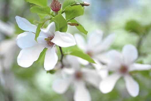 Spring Vitality by Jenny Rainbow